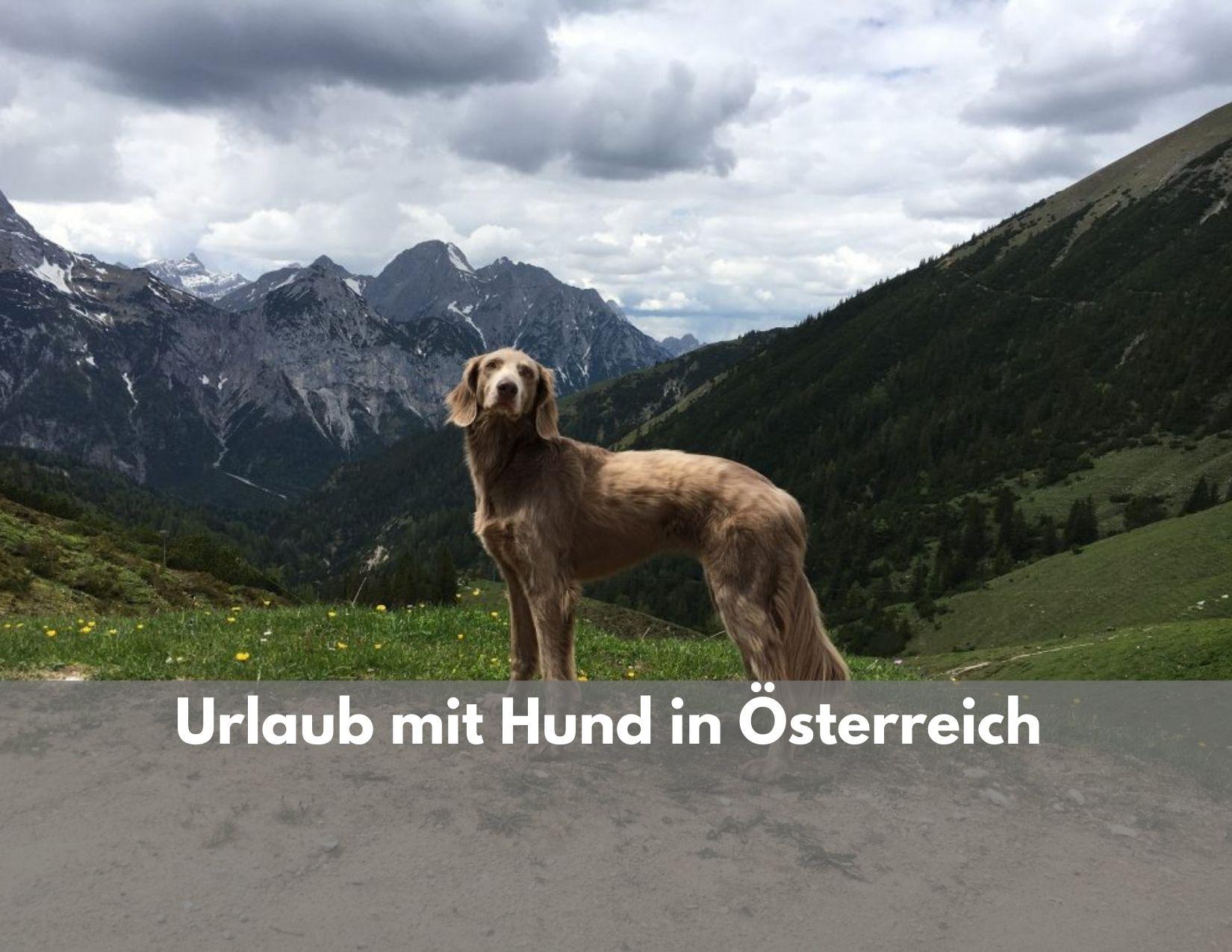 Österreich single urlaub