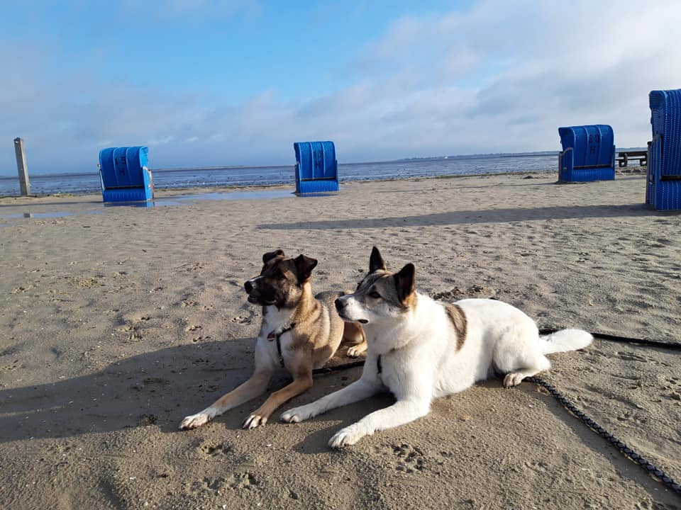 Nordseeurlaub mit Hund