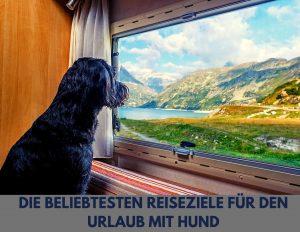 Die beliebtesten Reiseziele für den Urlaub mit Hund