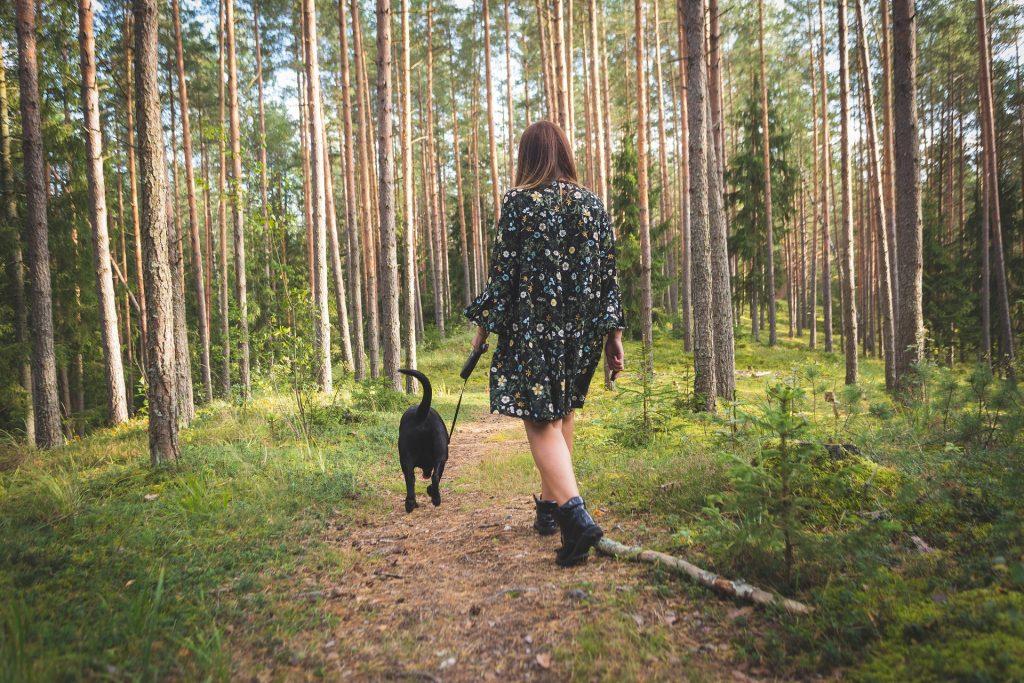 single urlaub mit hund im harz)