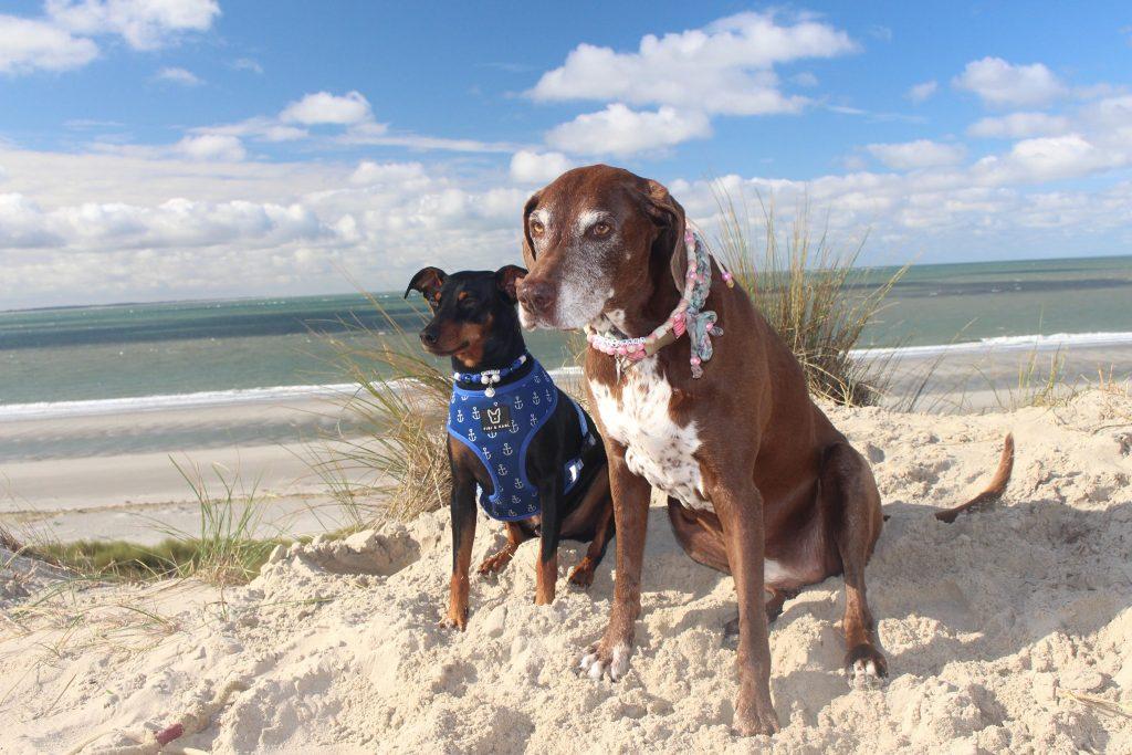 Urlaub mit Hund in Zeeland - Burgh-Haamstede